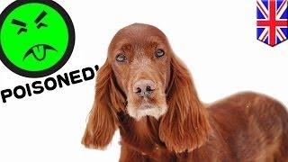 Собака погибла, отравившись во время собачьей выставки