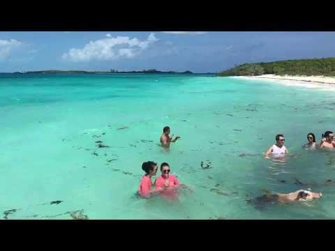 Swimming Pigs at Big Major Cay in the Exumas