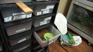 snake nursery miss green update