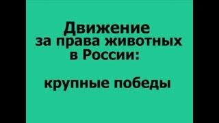 Движение за права животных в России: крупные победы