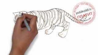 Как нарисовать тигра готового к прыжку(Как нарисовать тигра поэтапно карандашом за короткий промежуток времени. Видео рассказывает о том, как..., 2014-07-10T14:01:53.000Z)