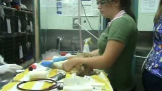 The Dog Line Tiggs Bandage Change