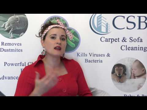 What Is Carpet Moth And How To identify It? - CSB Carpet Cleaning