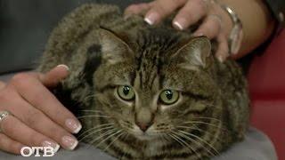 Знакомство с питомцами: кот Кузя ищет хозяев