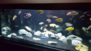 beamswork led aquarium lights