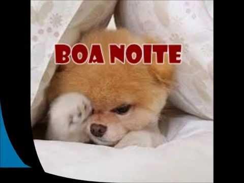 mensagem de boa noite engraçadas com cachorro