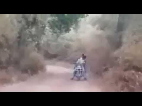 Live Encounter by Tiger On 2 Motorcyclist in Jungle of Vidarbha, Maharashtra, (INDIA)