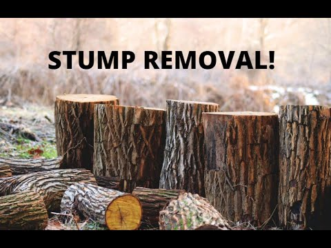 How To Remove A Stump Without Heavy Expensive Equipment! Ep 4
