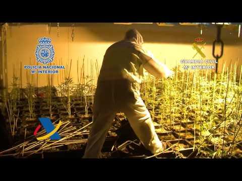 Desarticulado un grupo criminal dedicado al cultivo indoor de marihuana con plantación en Zamora