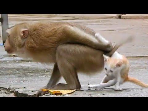 Monkey and poor Cat playingKaynak: YouTube · Süre: 5 dakika53 saniye