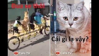 cats tv | chó mèo hài hước nhất thế giới - tik tok trung quốc HD