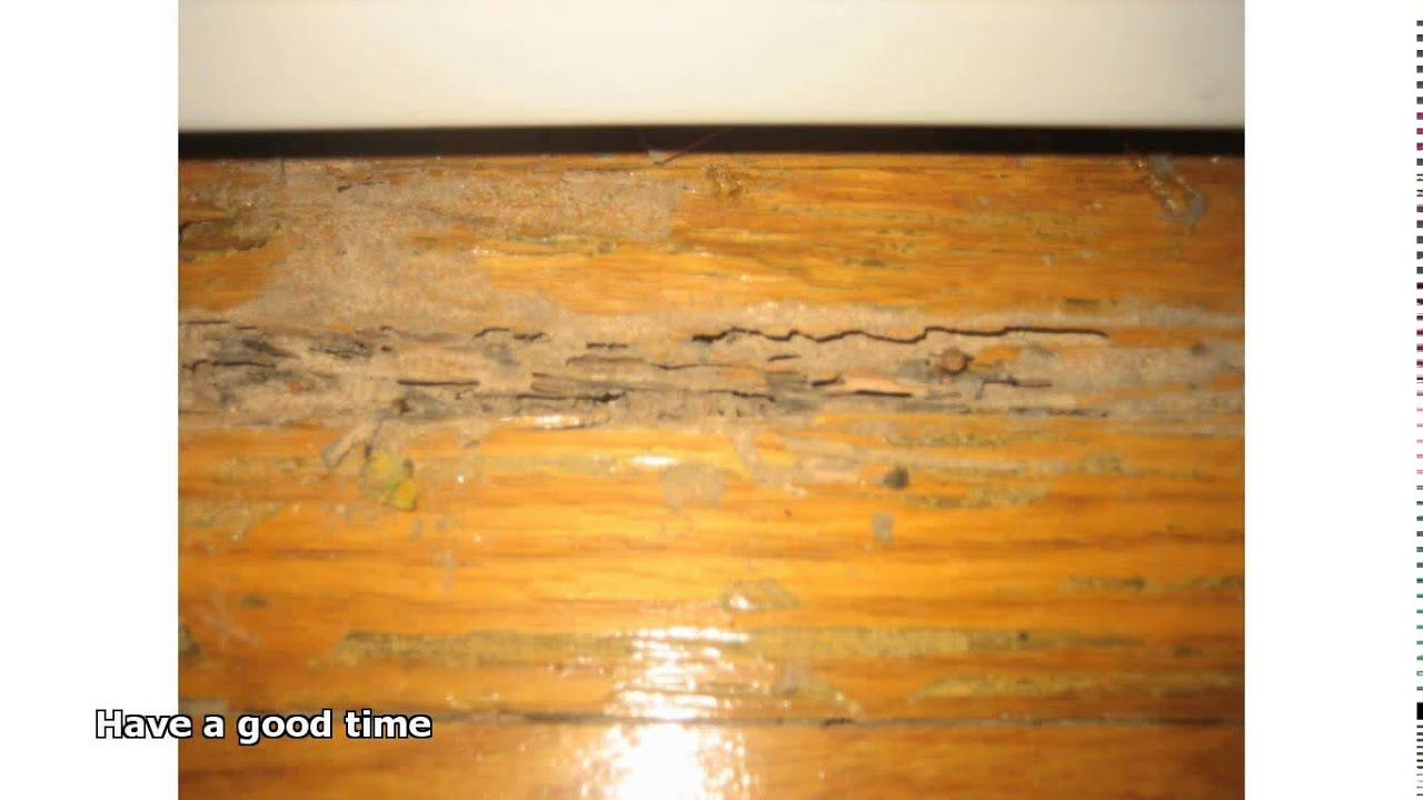 cleaning old hardwood floors  YouTube