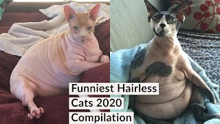 Best Funny Sphynx Cat Videos Compilation 2020. You Would Love The Hairless Breed Of Cat.