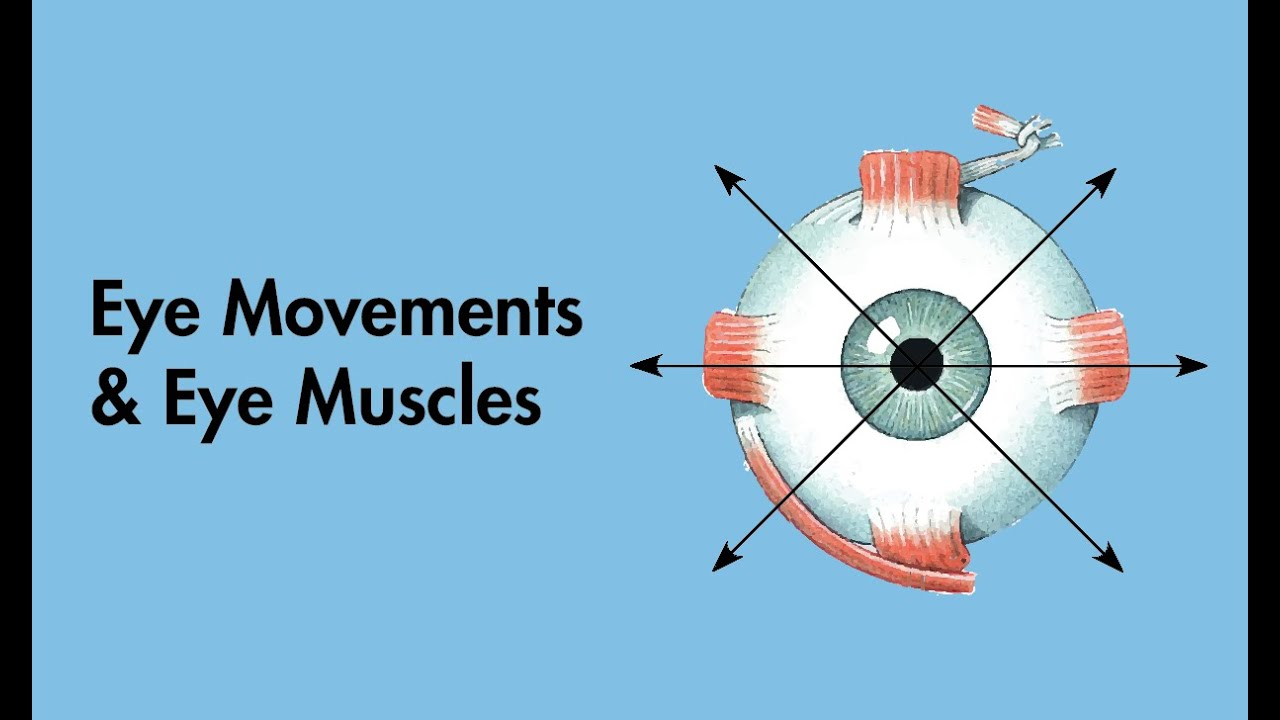 Cranial Nerves - Eye Movements and Eye Muscles - MEDZCOOL - YouTube