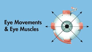 Cranial Nerves - Eye Movements and Eye Muscles - MEDZCOOL