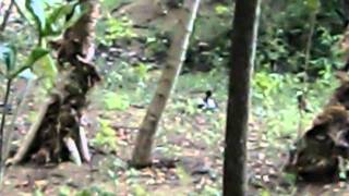 They live anywere in Fiji.and they aren't afraid human. It's their ...