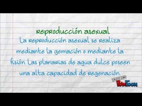 Reproduccion asexual regeneration usa