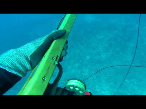 Solo Diving And Jupiter Sharks - Spearfishing