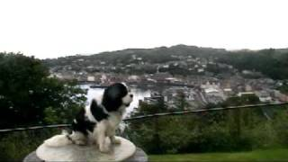 Lucy Cavalier King Charles Spaniel Visits Oban,loch Awe + Tyndrum