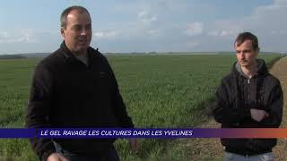 Yvelines | Le gel ravage les cultures dans les Yvelines