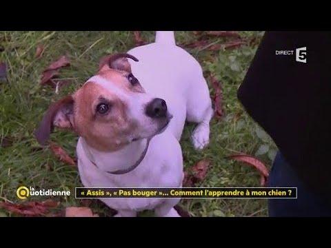 comment apprendre à son chien à ne pas bouger
