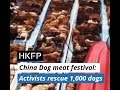 Chinese activists stop truck, rescue 1,000 dogs ahead of Yulin dog meat festival