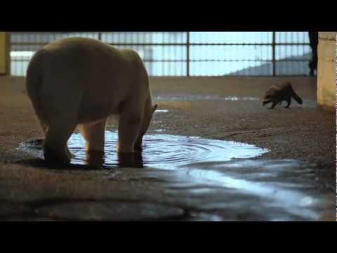 Nissan of Newport News Presents the Nissan Leaf and the Polar Bear.flv