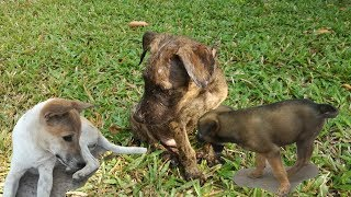 The Baby Dogs Playing - Dogs Videos - Dogs Playing - Cute Dogs - Dogs 2020