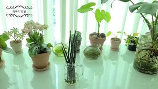 식물인테리어 몬스테라 수경재배 구피키우기 친환경 어항 …