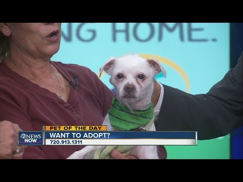 Pet Of The Day (5/9) With Denver Animal Shelter