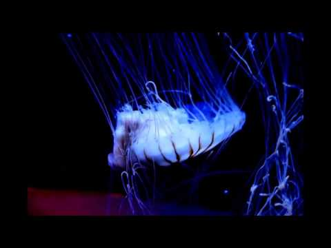 SEA Aquarium Jellyfish