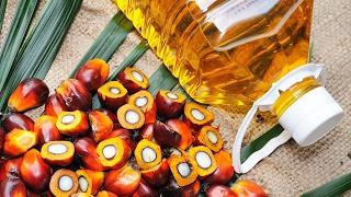 Risiko Palmöl: Krebserregender Stoff in Lebensmitteln?