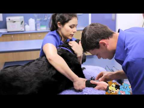 An anaesthetic for a dog or cat procedure or surgery - Blackburn Vet Centre
