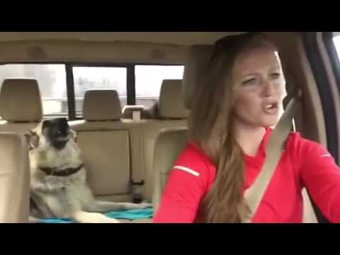 Dog Sings With Owner Karaoke We Are The Champions