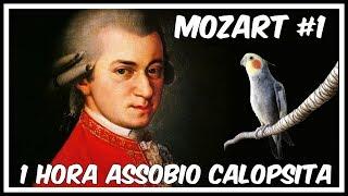ASSOBIO CALOPSITA - MOZART - COCKATIEL WHISTLE