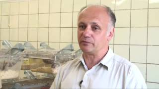 Сибирские хомяки размножаются при любом морозе