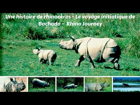 Q De Rhino Une histoire de rhinoc...