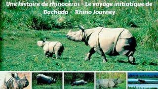 Une histoire de rhinocéros - Le voyage initiatique de Bachada -  Rhino Journey