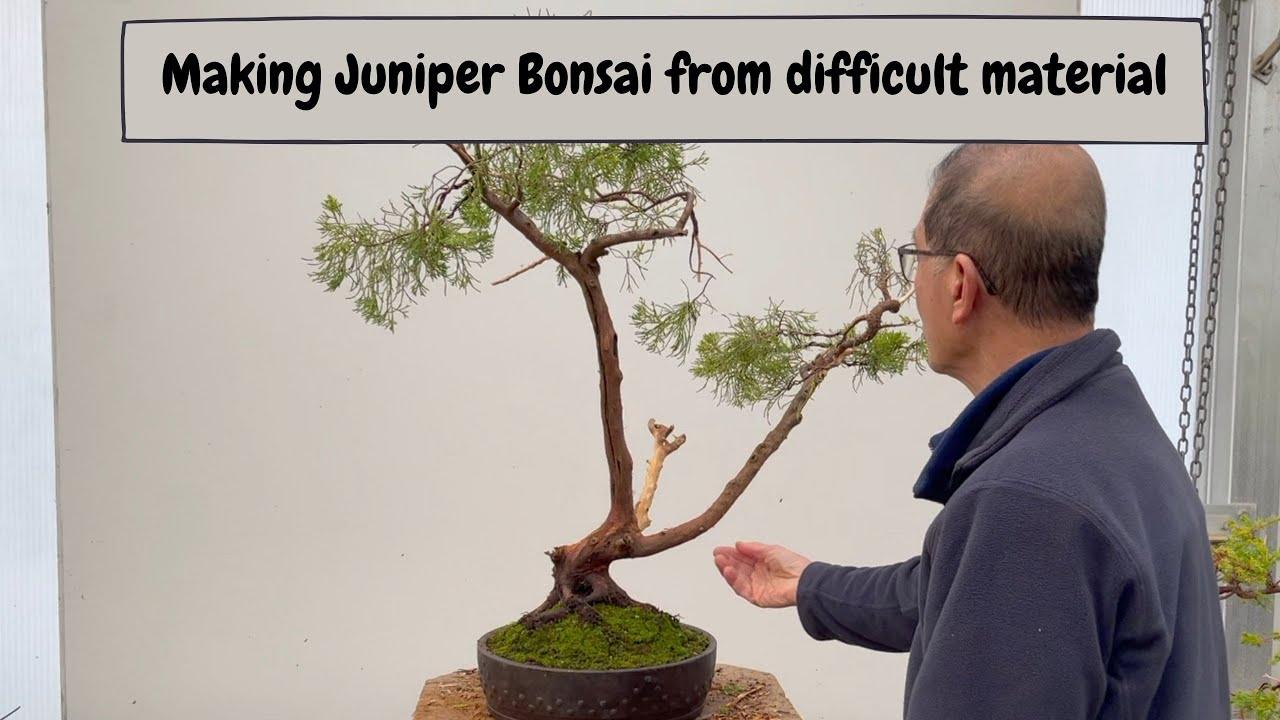 Download Making Juniper Bonsai from Difficult Material