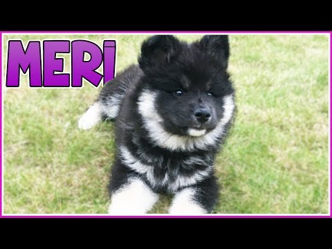 Meri the Crazy Pup!