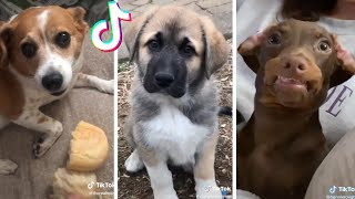 Cutest Puppies & Funniest Dogs on TikTok Compilation ~ Try Not To Laugh