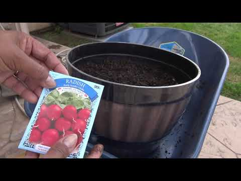 Testing Out DollarTree 25 Cent Vegetable Seeds! Sowing To First Sprouts!