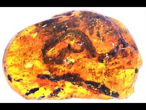 Baby Snake Fossil in Amber is 99 Million Years Old