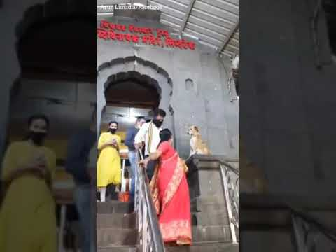 Dog-turns-Saint.-Watch-adorable-video-of-dog-blessing-devotees-at-a-temple-in-Maharashtra-India