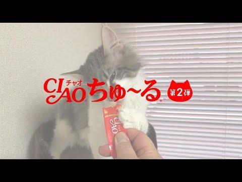 【CIAOちゅ〜るMV】「ちゅ〜るしよ!」【第2弾】