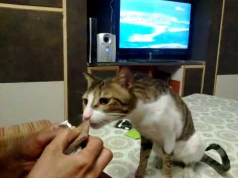 Feline Hairballs-A Hairy Dilemma - vetcornelledu