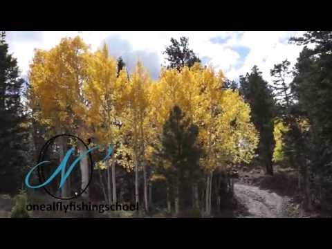 Brook Trout Fly Fishing Boulder Mountain In Utah