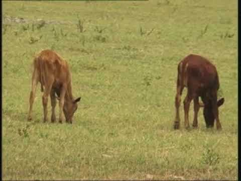 Eiseb Block community bemoans lack of livestock auction facilities - NBC