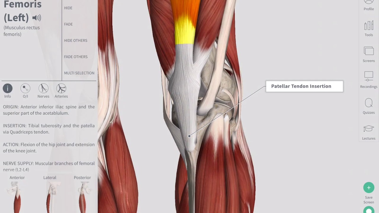 Deep Tendon Reflexes Complete Anatomy Youtube