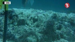 Higit 2 Ektary Ng Coral Reef Sa Cebu, Napinsala Sa Sumadsad Na M/V Belle Rose